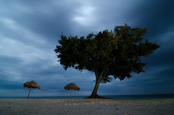 Tree at night in a beach in Trinidad, Cuba. Photography tour of night photography in Cuba