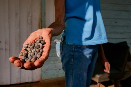 coffee collectors in vinales, trips of photography to cuba led by louis alarcon