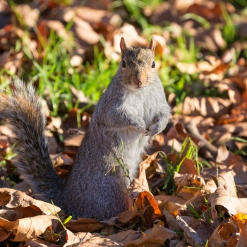 Portrait of a new friend from Hyde park