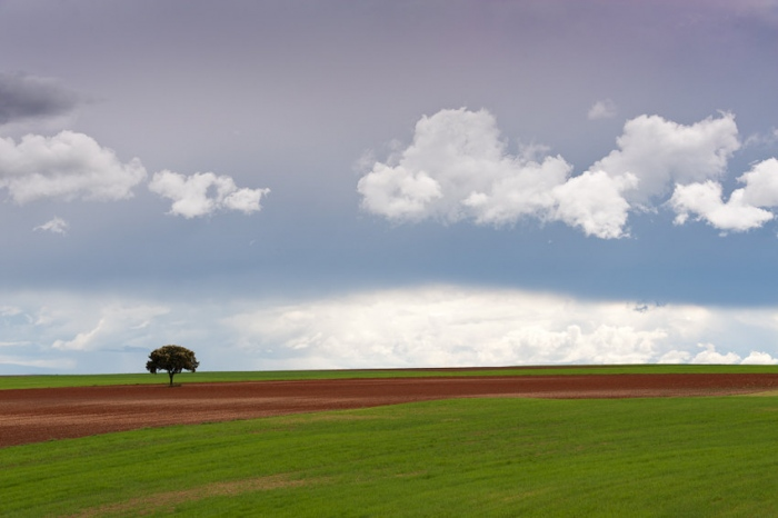 Perhaps rain. Lonely tree with storm sky